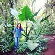 Luciana Bacheschi - Landscape Solutions