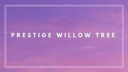Prestige Willow Tree