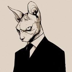 Franky   Katze
