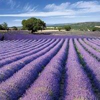 Martin Provence