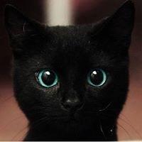 Mèo Hen