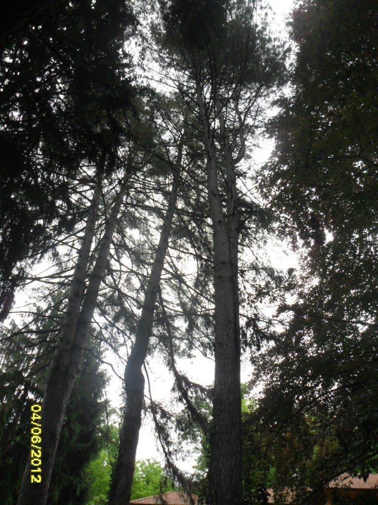 Interventi sulla vegetazione arborea di una ex clinica in ordine alla sicurezza dei luoghi