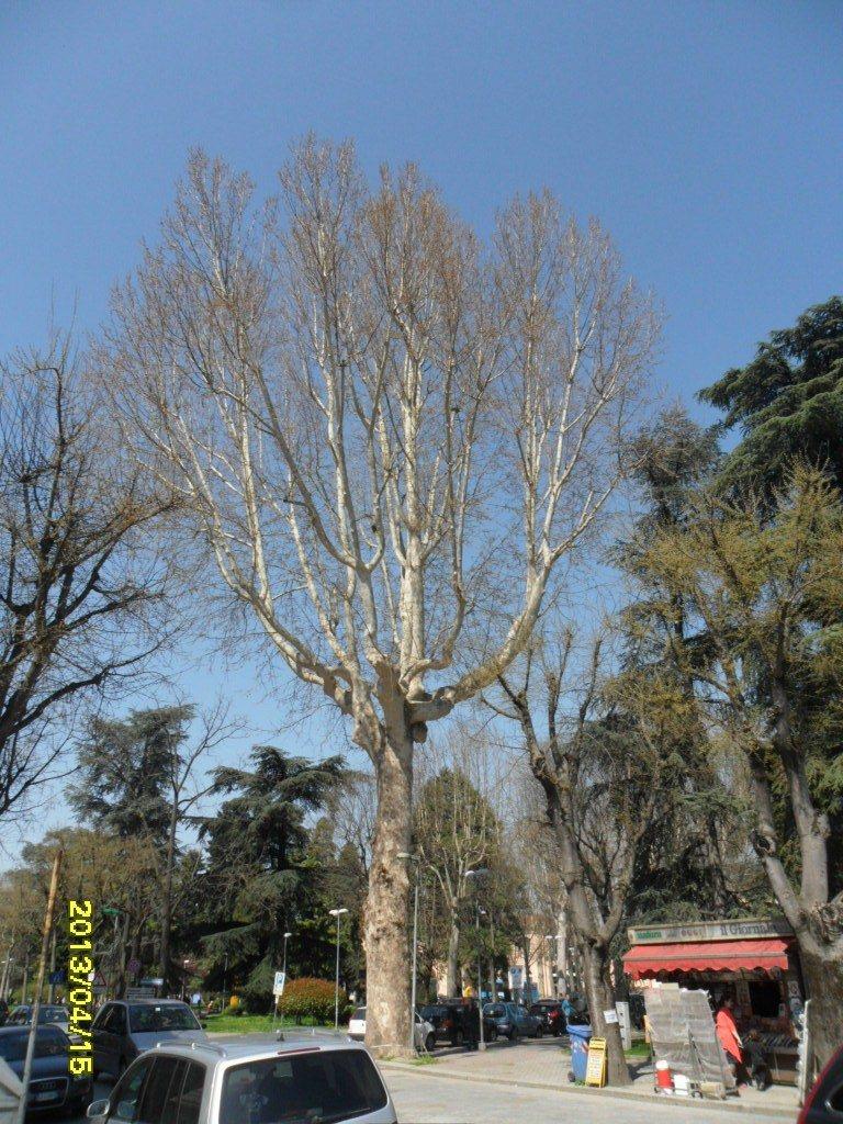 Valutazione di stabilità di 100 alberi della Città di Voghera