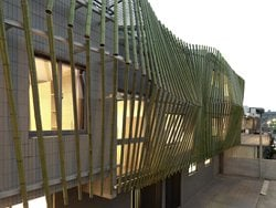 Bamboo Forest House
