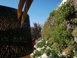 vertical garden, giardino verticale, green wall, giardini verticali