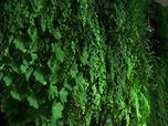 Vertical garden, giardino verticale.