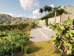 Winery Asteras -  Paros Island Cyclades Greece