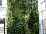Vertical garden, giardini verticali, green wall