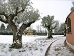 Il Giardino delle Passioni - The garden of passions
