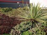 roof garden, green roof, verde pensile, giardino pensile. tetti verdi