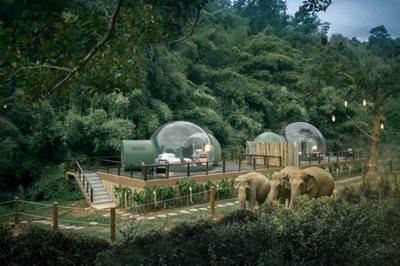 Jungle Bubble: the elephants outside your room