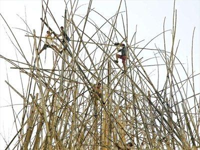 Big Bambú: Doug + Mike Starn for Enel Contemporanea 2012