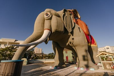 A Historic, Elephant-Sized Stay