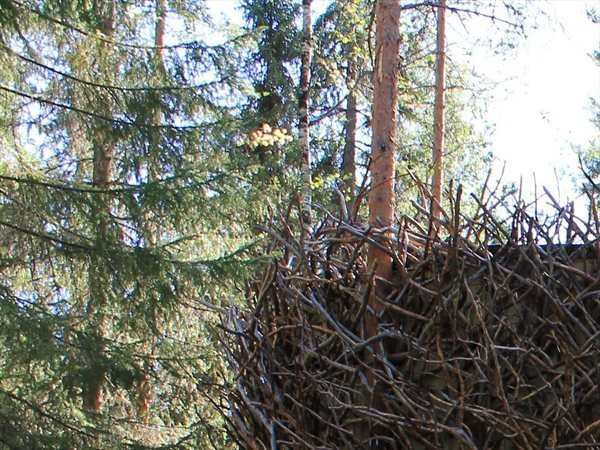 The Bird's Nest Inredningsgruppen